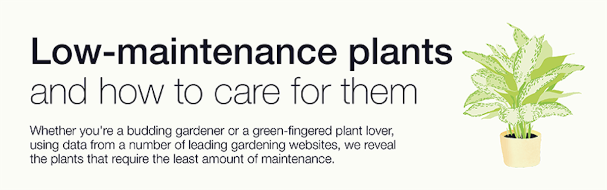 Header image of low-maintenance plants and how to care for them
