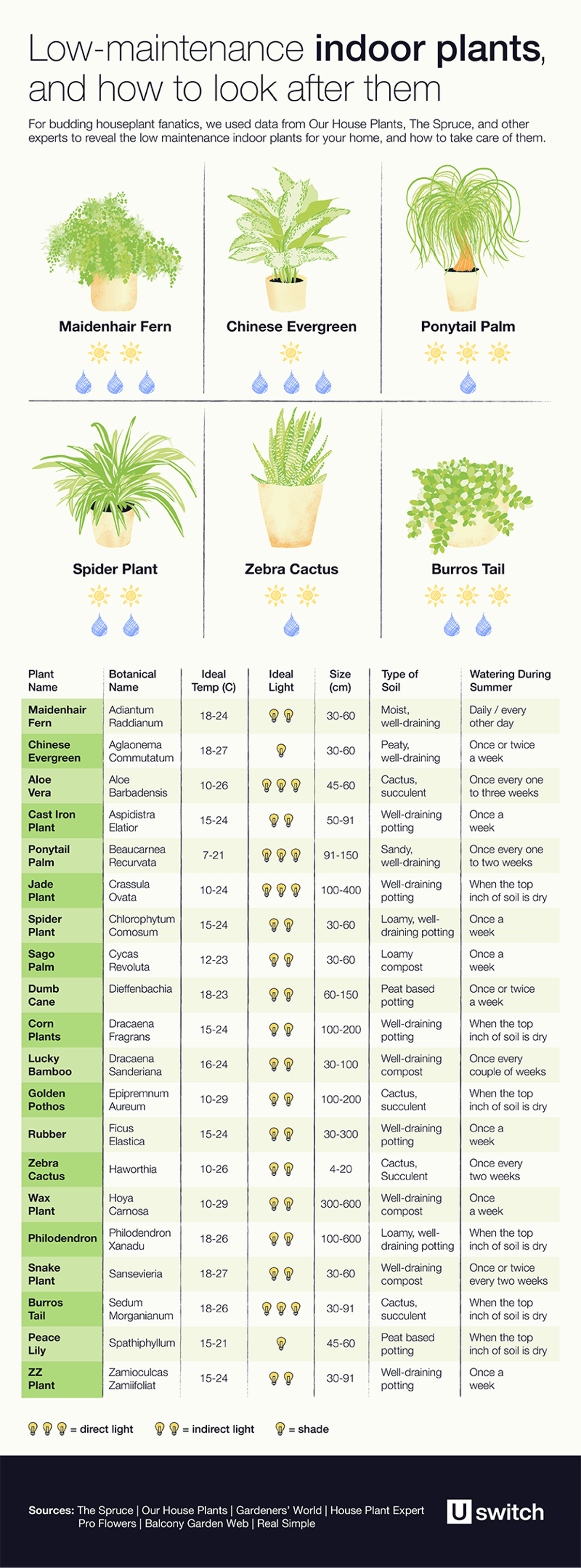 Table of low maintenance indoor plants and how to take care of them