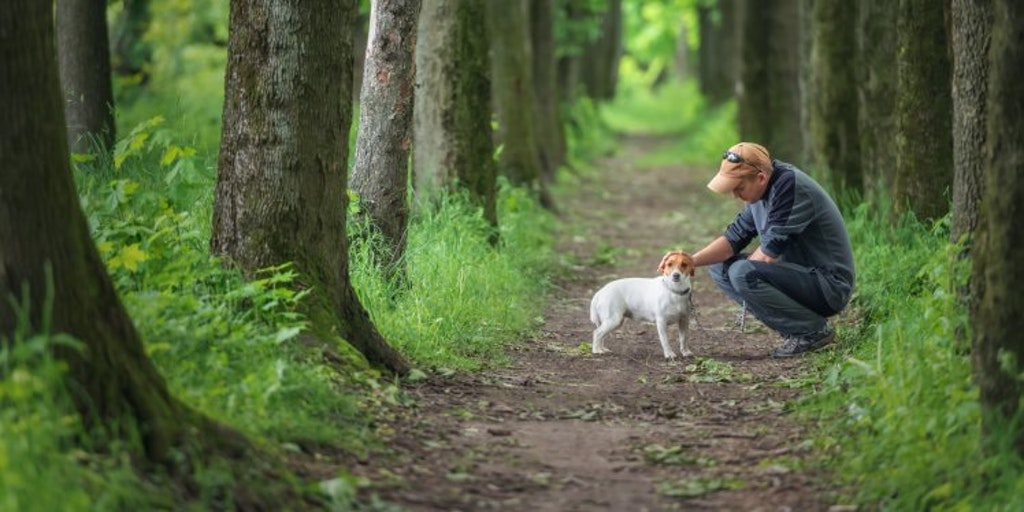 A Buyer S Guide To Pet Insurance Money Co Uk