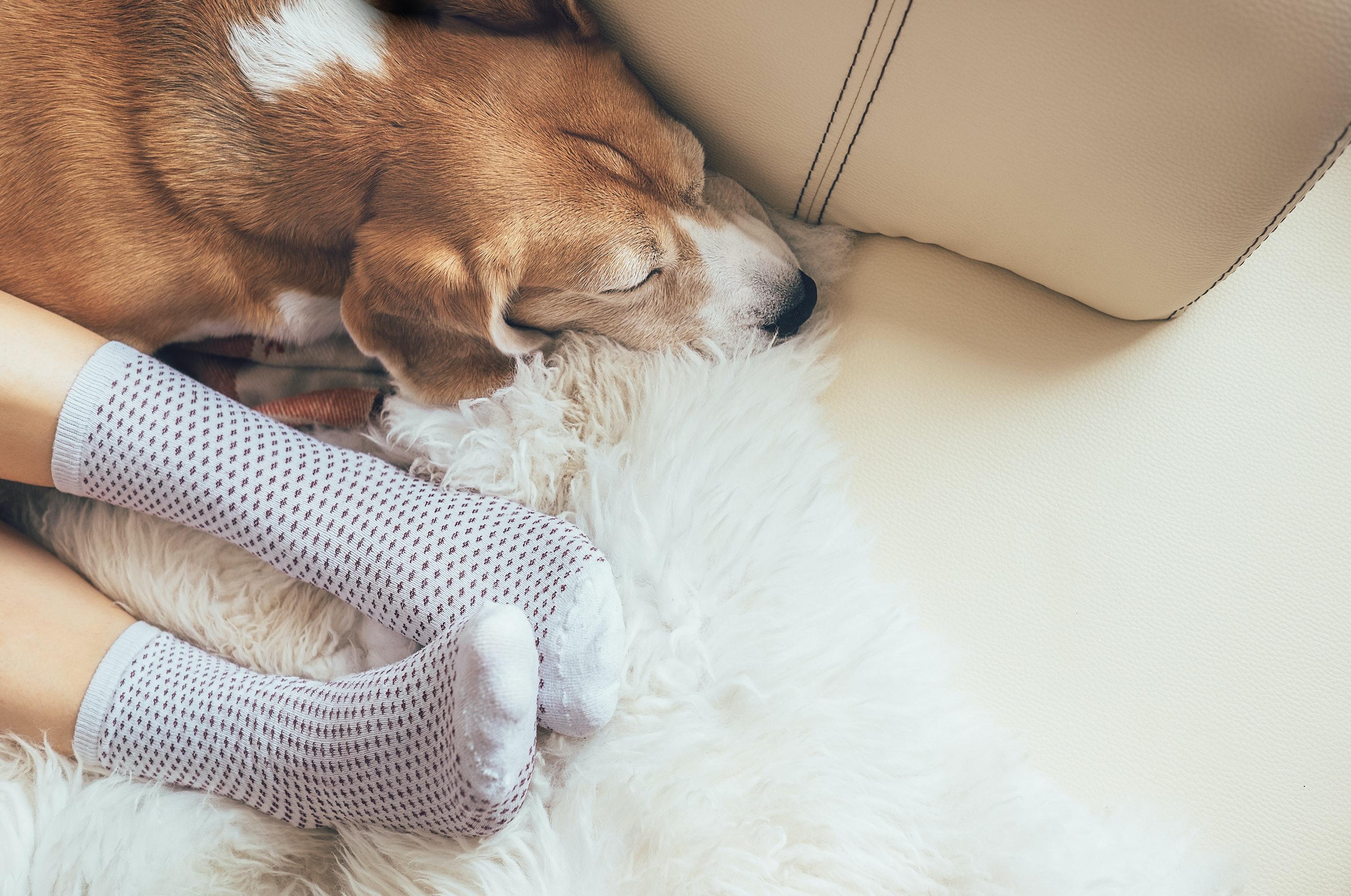 Warm home with dog