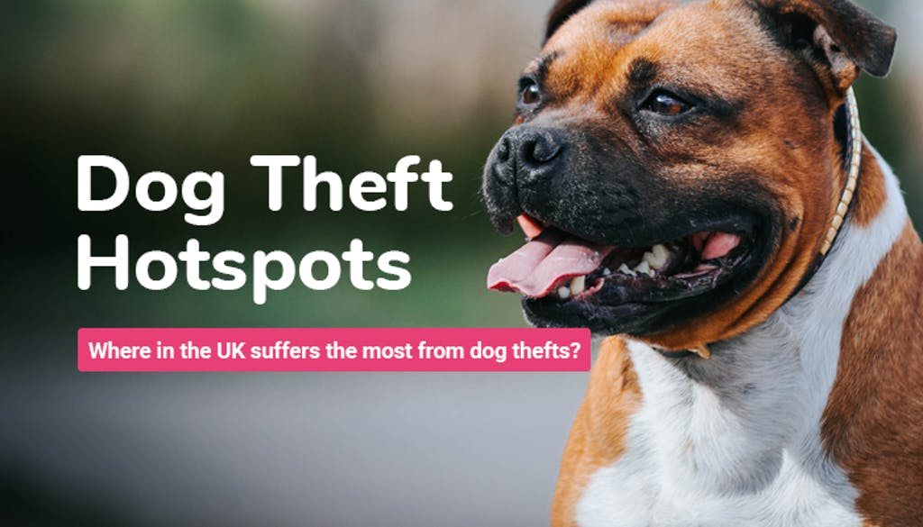 A picture of a dog with a title which reads: Dog Theft Hotspots. Which area in the UK suffers the most from dog thefts?