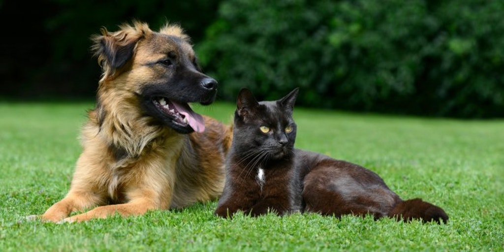 How To Claim On Your Pet Insurance Policy Money Co Uk