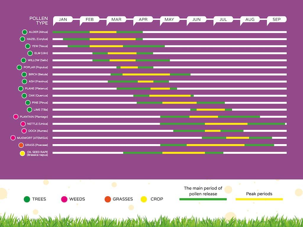 UK Pollen calendar showing peak release times