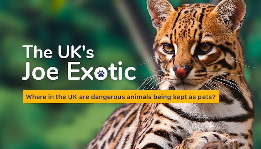 Exotic animals header image of Ocelot